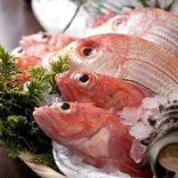 鮮度抜群!新鮮魚介をお楽しいください♪