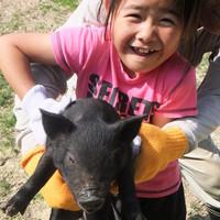 自社農場で生産したアグー豚