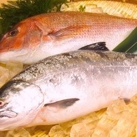 道内各地より旬の鮮魚・食材を毎日入荷!!