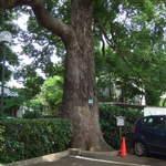 珈琲館 くすの樹 - 樹齢200年のくすの樹