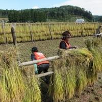 南三陸ボランティアでお手伝いした地元農家自慢の米!