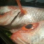 酒・肴 魚信 - ノドグロ  塩焼き・煮付け  各1600円  名古屋なら3000円かも