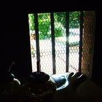 コーヒー・ブリックス - 2階の小窓