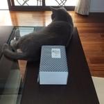 40303009 - ケーキの箱とケーキ好きの伝次郎(後姿)