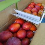 冰讃 - こんな色のマンゴー、日本でいったい幾らします?