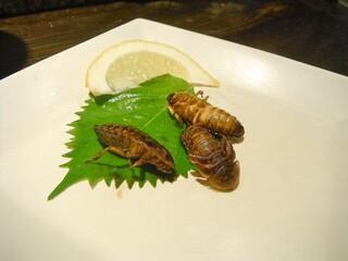 珍獣屋 - ゴキブリ