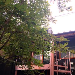 和醸良麺 すがり - 入り口がある中庭