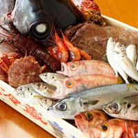 毎日漁港直送のお魚入荷!鮮度抜群!