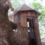 レ・グラン・ザルブル - 都会らしからぬ大樹とツリー・ハウスを併せ持つ素敵なカフェ♪3