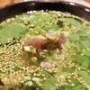 割烹 天平 - 料理写真: