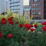 43934917 - 薔薇園から見える北浜レトロ