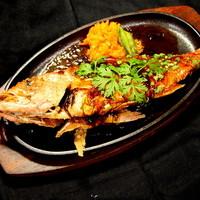 本日獲れたて!近港からの県産魚一本料理