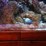 BLUE FISH AQUARIUM - シャーク!!Σ(・ω・ノ)ノ!