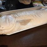 う越貞 - 白甘鯛 4.5kg 愛媛県八幡浜