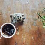 えんとつ - KEMUというリクガメが散歩してます。 オムバスコーヒーは美味しいです。