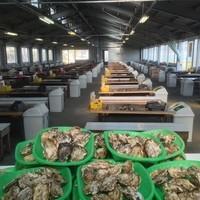 大人数が収容できる最大級の牡蠣小屋