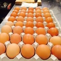 宮城県産平飼い自然卵