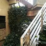 JAZZ茶房 靑猫 - 外観写真:階段を降りて