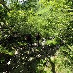 岳沢小屋 - 楽な道だけど膝は苦笑い中。