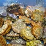 よしうみいきいき館 - ヒオウギ貝
