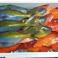 【要予約】お客様の釣り魚を料理致します!