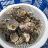 海上かき小屋 - 料理写真:九十九島セット1600円のかき1キロと別注のサザエ(中)