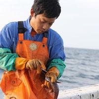 【漁師直結】全国の漁師から届く最高鮮度の魚
