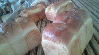 石井製パン