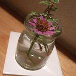 トラットリア チーボ - お花