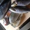 四季彩 鮨楽 - 料理写真:仕入れにより珍しい魚の入荷もございます