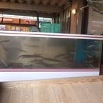 蟹かに亭 - 水槽で泳ぐイカさん
