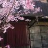 肉家 桜真 - 外観写真: