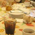 パラソル - 食べ終わった後の写真ですいません
