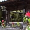 秋月小町 - メイン写真: