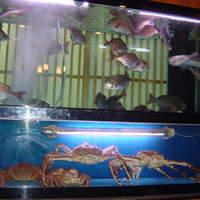 大型水槽より活きの良い魚貝を御提供致します!