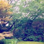 蔦珈琲店 - お庭を臨めます