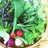 Cafe je jardin - 料理写真:すべてのランチには近江の旬の山盛りサラダが付きます