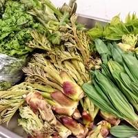 季節ごとに届く無農薬野菜と鮮魚、ジビエ