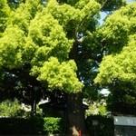 珈琲館 くすの樹 - 樹齢200年以上の゛くすの樹゛