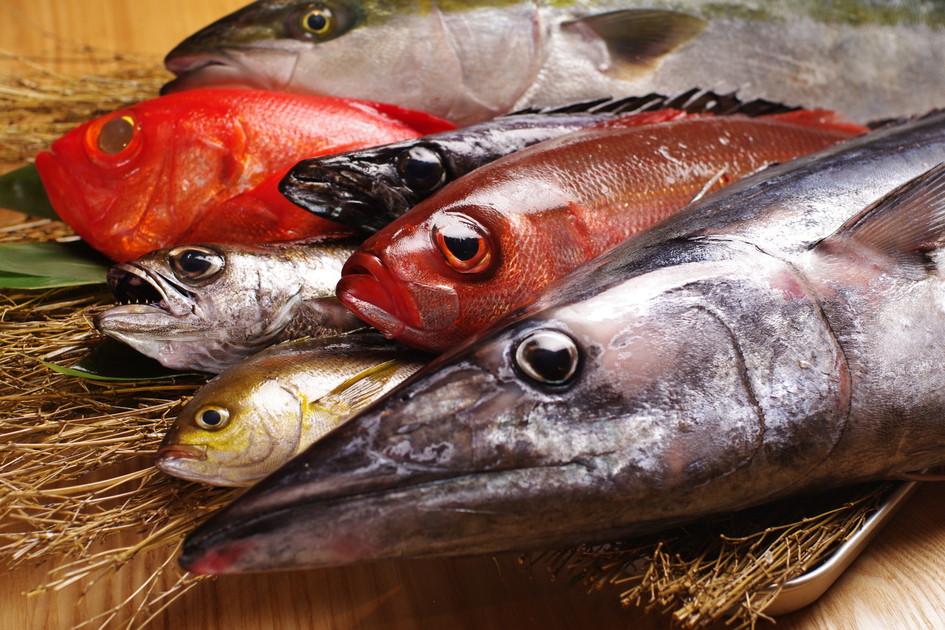 銀座 魚ばか