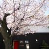 円山 銀座園 - メイン写真: