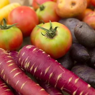 【安心・安全】有機野菜を使用した料理!