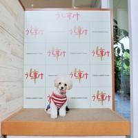 愛犬と写真☆専用ブース