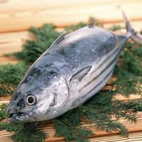 日本一のカツオ、極上一本釣り鰹。