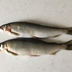 柿崎商店 海鮮工房 - 鮎1尾、280円です。
