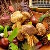 懐石料理 花壇 - 料理写真: