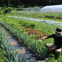 ◆無農薬で化学肥料を用いずに栽培の美味い野菜