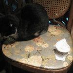 ドナテロウズ - 店内には犬・猫が非常勤でいます