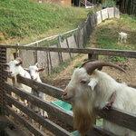 5464169 - 山羊の親子