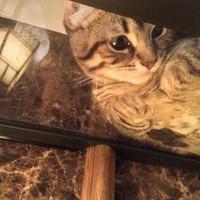 かわいらしい猫にまつわるグッズのコレクション!